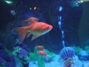 Kundentyp Goldfisch Kotler